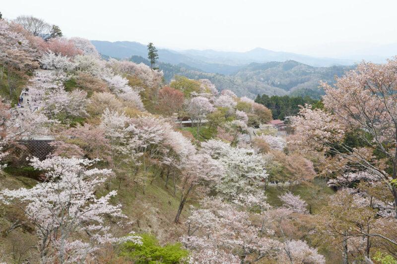 Hanamiyama park (Fukushima)